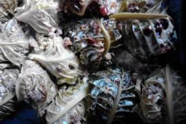 involtini-verza-carne-tritata